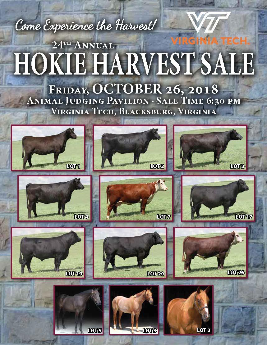Beef Cattle Center | APSC | Virginia Tech